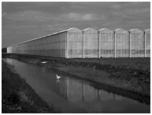 Agrarische industrie in Nederland